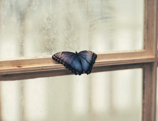 Lessons of a Struggling Butterfly